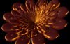 Solid flower
